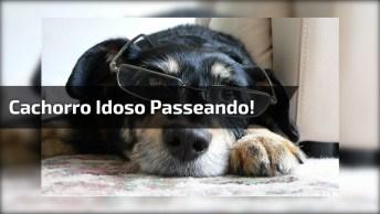 Dono Faz Carrinho Para Levar Cachorro Idoso Para Passear, Olha Só Que Amor!