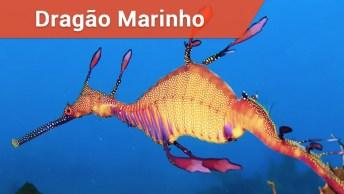 Dragão Marinho Comum, Um Animal Impressionante!