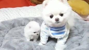 Duas Fofuras Juntas Em Um Vídeo Só, Que Cães Mais Lindos, Confira!