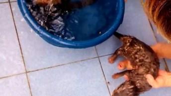 Duas Lontrinhas Tomando Banho, Olha Como Gostam De Água, Muito Fofo!