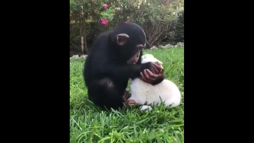 Dupla de amigos no mundo animal mais fofa que vai ver hoje