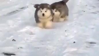 Dupla De Cachorros Filhotes Super Fofos Correndo Na Neve, Tem Como Não Amar?