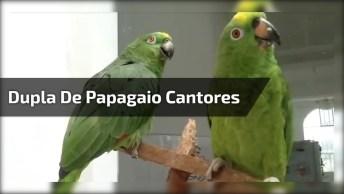 Dupla De Papagaio Cantando Muito, Será Uma Nova Dupla Sertaneja?