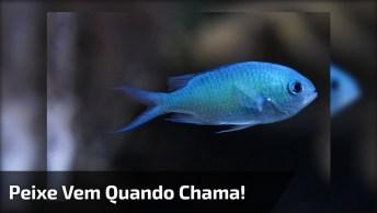 E Ainda Dizem Que Os Peixes São Seres Frios, Sem Sentimentos!