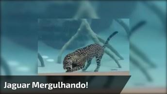E Depois Dizem Que Gato Tem Medo De Água, Que Não Sabe Nadar!