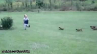É Muita Fofura Em Um Vídeo Só, Quantos Filhotes Que Coisa Mais Fofa!