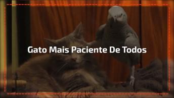 E O Troféu De Gato Mais Paciente Do Mundo Vai Para. . . O Gato Do Vídeo!