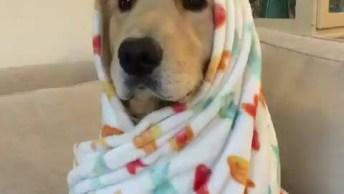 É Um Cachorro Ou Um Bebê? Alguém Consegue Decifrar? Confira!