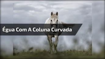 Égua Com A Coluna Curvada, Apesar Do Da Curvatura Ela Não Sente Dor!