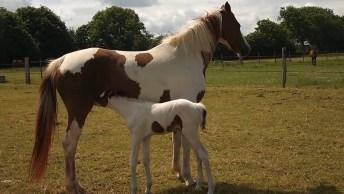 Égua Com Seu Filhotinho, Olha Só Que Coisinha Mais Lindinha!