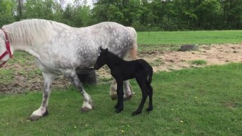 Égua Passeando Com Seu Filhote, Olha Só Que Animais Lindos!