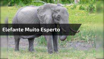Elefante Pega Lixo Com As Trombas E Coloca Em Lata De Lixo, Sem Palavras!