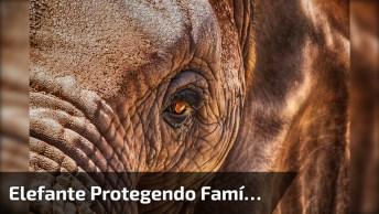 Elefante Protegendo Família Para Atravessar No Meio De Uma Estrada, Confira!