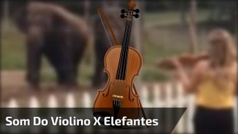 Elefantes Dançando Ao Ouvir Música Clássica, Muito Legal Este Vídeo!