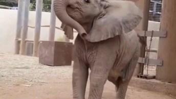 Elefantinho Pulando De Alegria, Compartilhe No Facebook Para Desejar Bom Dia!