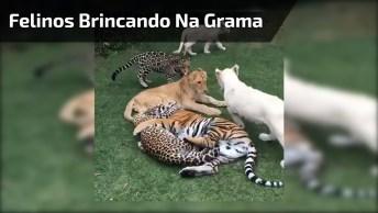 Embolado De Felinos Para Alegrar O Seu Dia, Você Vai Amar Esse Vídeo!