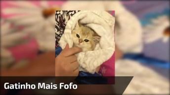 Embrulhando Gatinho Como Um Bebê, Que Cena Mais Fofa, Confira!