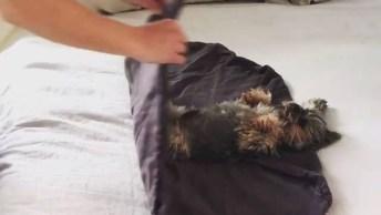 Embrulhando O Cachorrinho Na Cobertinha, Ele É Um Bebezinho!