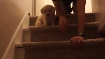 Ensinando O Filhotinho De Cachorro A Descer Escadas, Uma Cena Divertida E Fofa!