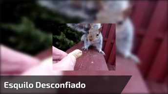 Esquilo Desconfiado Para Pegar Amêndoa, Veja Que Cena Engraçada!