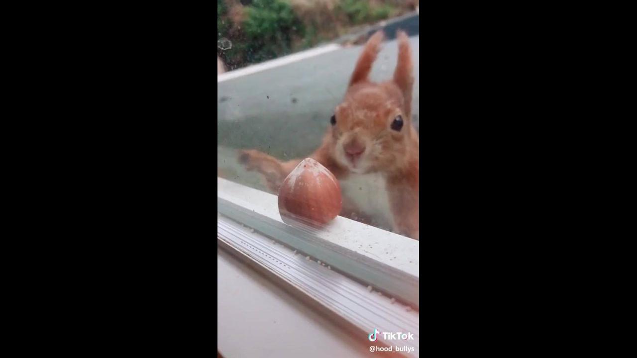 Esquilo pegando uma castanha