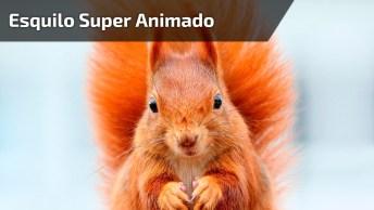 Esquilo Super Animado Porque Amanhã É Sexta-Feira! Só Que Não, Hahaha!