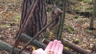Esquilo Voa Até Mão De Humano Para Pegar Comida, Que Incrível!