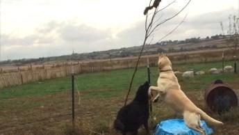 Esquilos Aprontando Todas Na Net, Olha Só Como São Espertinhos!