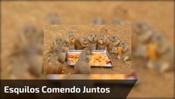 Esquilos Comendo Todos Juntos, Como São Fofinhos Estes Animais!
