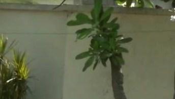 Esquilosinho Subindo Na Árvore, Veja Como Ele É Pequenininho!