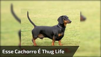 Esse Cachorro É Thug Life, Kkk! Olha Só O Que Ele Aprontou, Kkk!