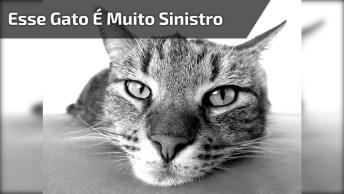 Esse Gato É Muito Sinistro, Mas Mesmo Assim É Muito Fofo, Confira!