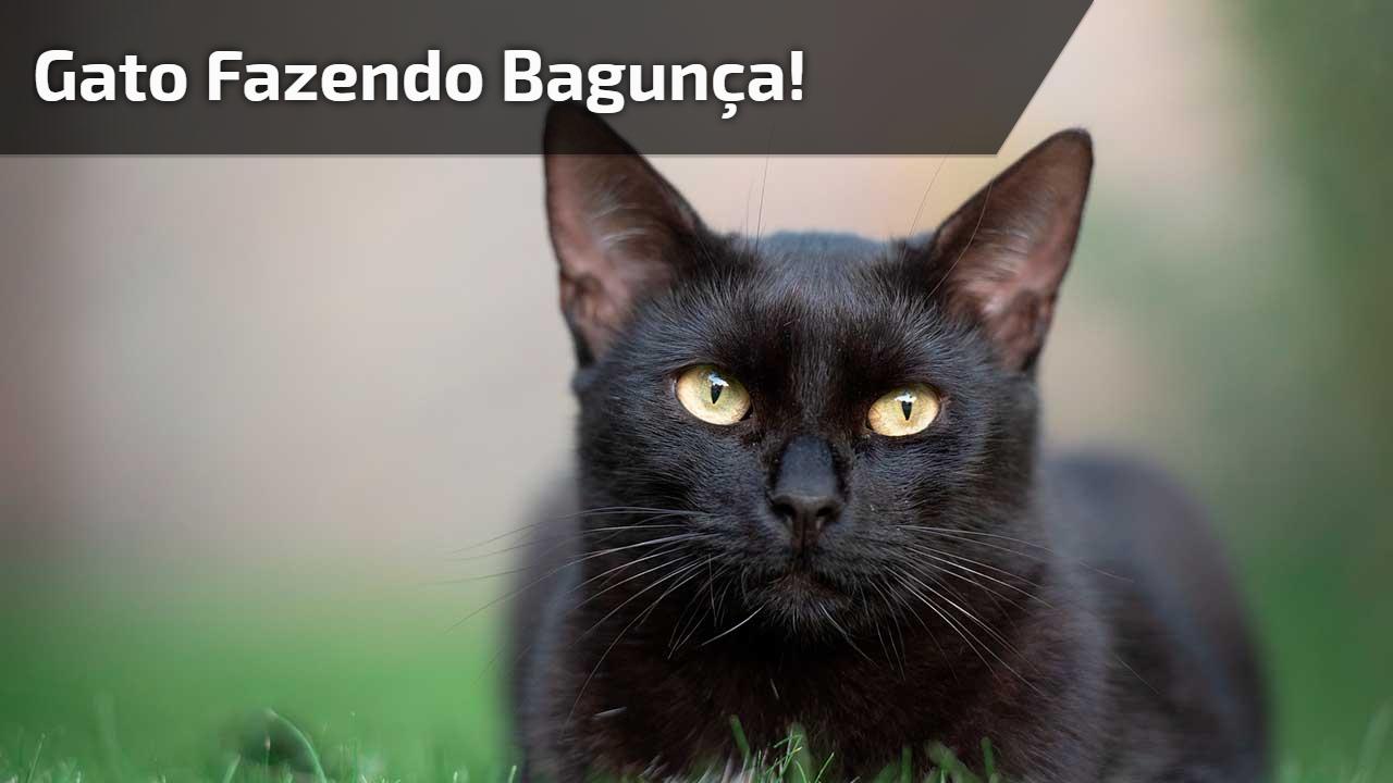 Esse vídeo de amnimal é para todos apaixonados em gatos, independente da bagunça