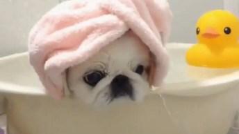 Esse Vídeo De Animais É O Mais Fofo Que Você Vai Ver Hoje! Que Banho Bom!