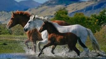 Esse Vídeo De Animais, Reuniu As Imagens Dos Mais Lindos Cavalos!
