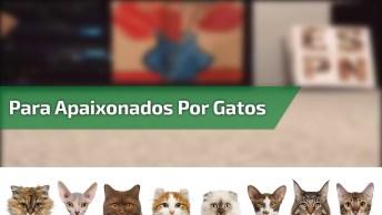 Esse Vídeo É Especial Para Os Apaixonados Por Gatinhos, Eles São Incríveis!