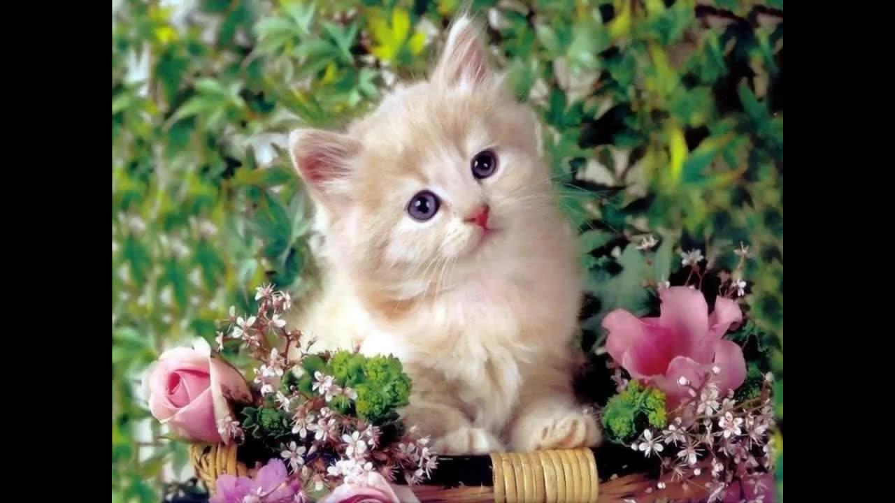 Esse vídeo é especial para todos apaixonados por gatinhos