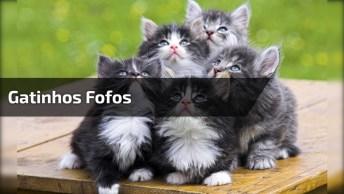 Esse Vídeo É Fofura Em Super Dose! Quem Gosta De Gatinhos Vai Ama!