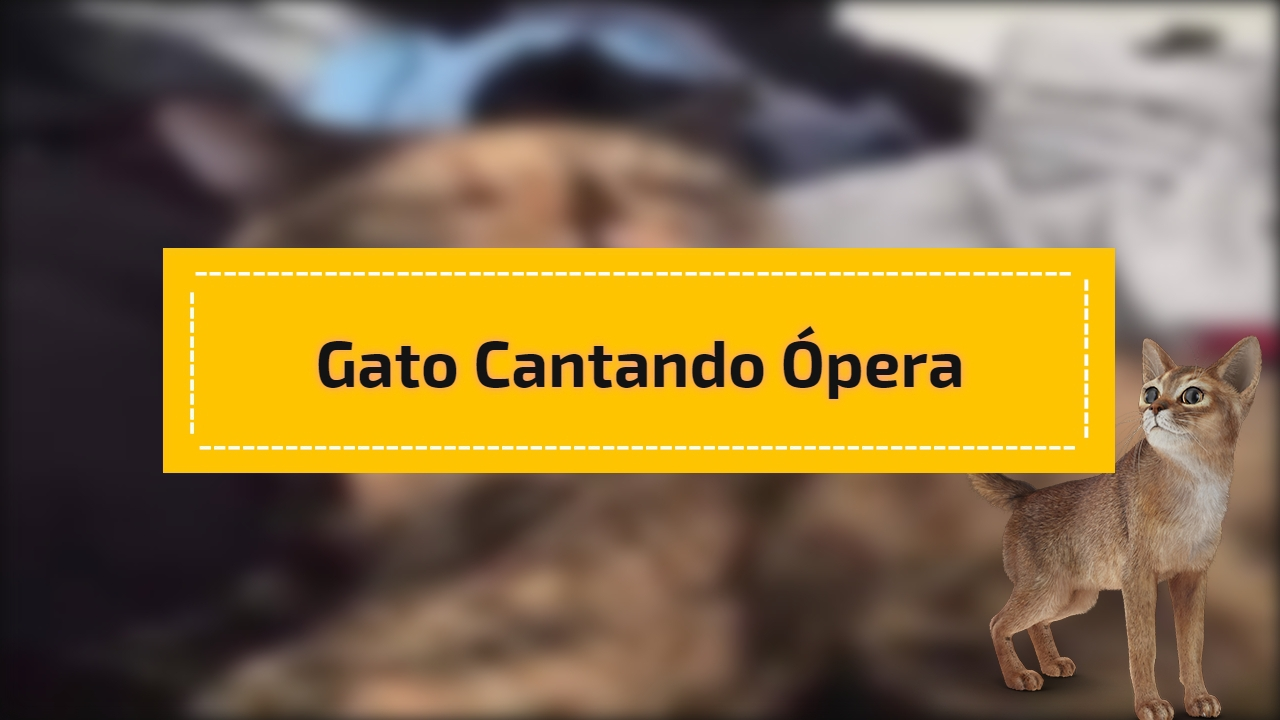 Gato cantando ópera