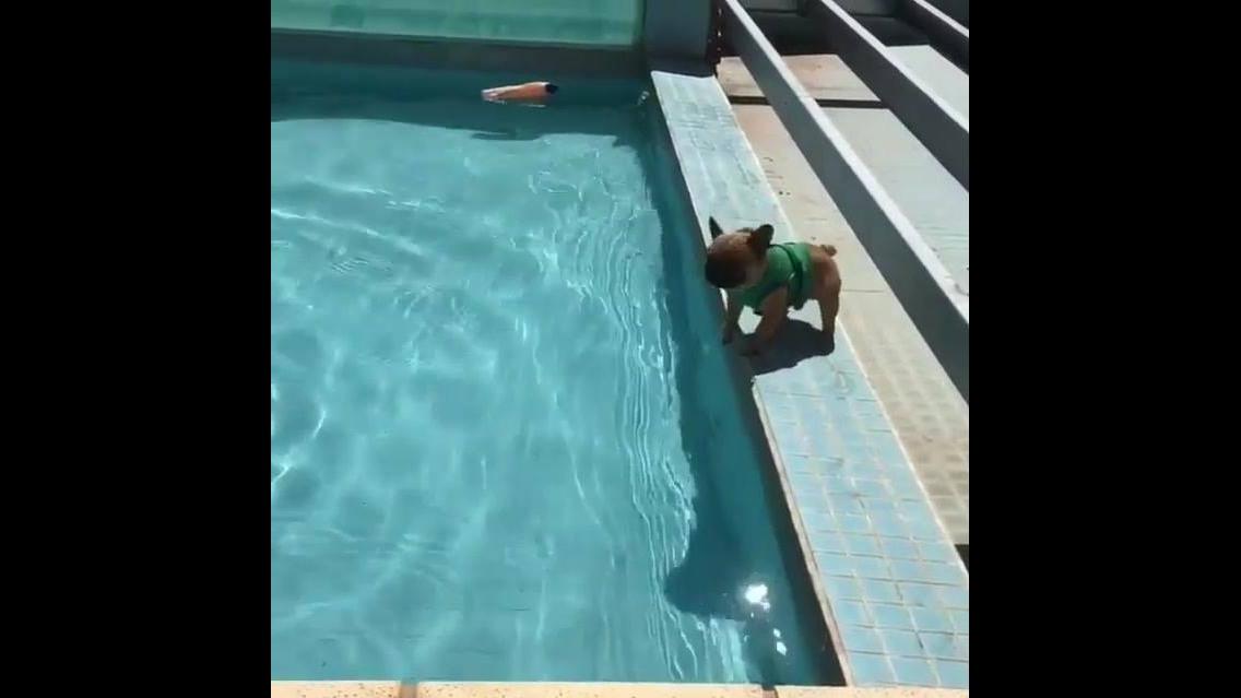 Esse vídeo é para quem é apaixonado por cães, veja que coisinha mais fofa!!!