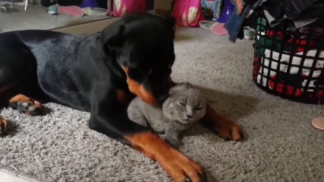 Esse vídeo vai para quem não acredita que cachorros possam gostar de gatos