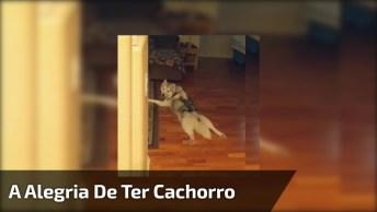 Esse Vídeo Vai Te Mostrar A Alegria De Ter Um Cachorro Na Sua Vida!