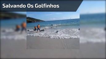 Este Vídeo É Muito Bacana! Veja Só Esta Galera Salvando Os Golfinhos Encalhados!