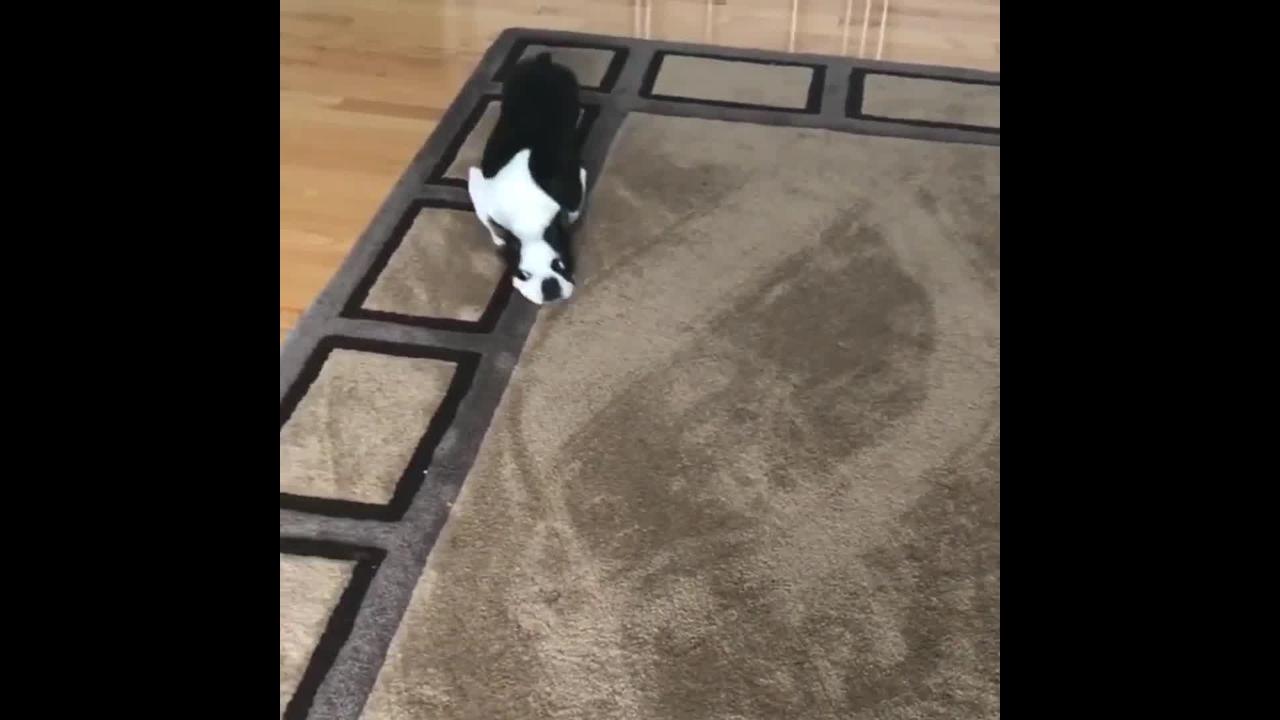 Eu indo na segunda-feira trabalhar, hahaha! Este cachorrinho me representa!!!