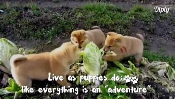 Eu Não Sabia Que Cachorros Gostavam De Verduras, Que Fofura!