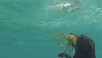 Eu Sei Que Os Cães Nadam, Mais Mergulhar Primeira Vez Que Vejo!