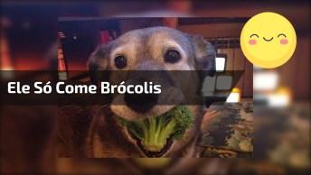 Faça Dieta Como Faz Esse Cachorro, Ele Só Come Brócolis, Confira!