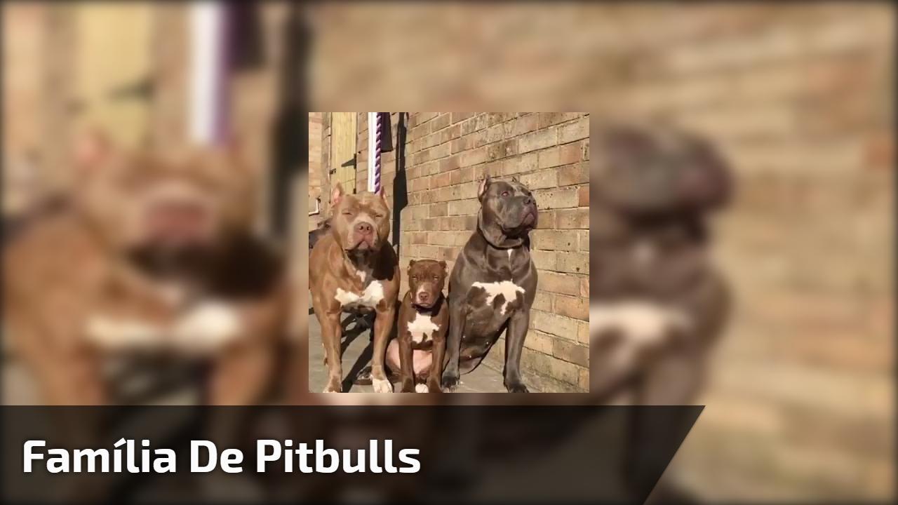 Família de Pitbulls