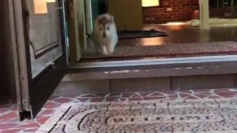 Família De Cachorros Passando Por Aqui Para Te Fazer Sorrir De Tanta Fofura!