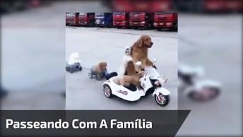 Família De Cachorros Passeando Com Moto, Veja Como Foi Isso!